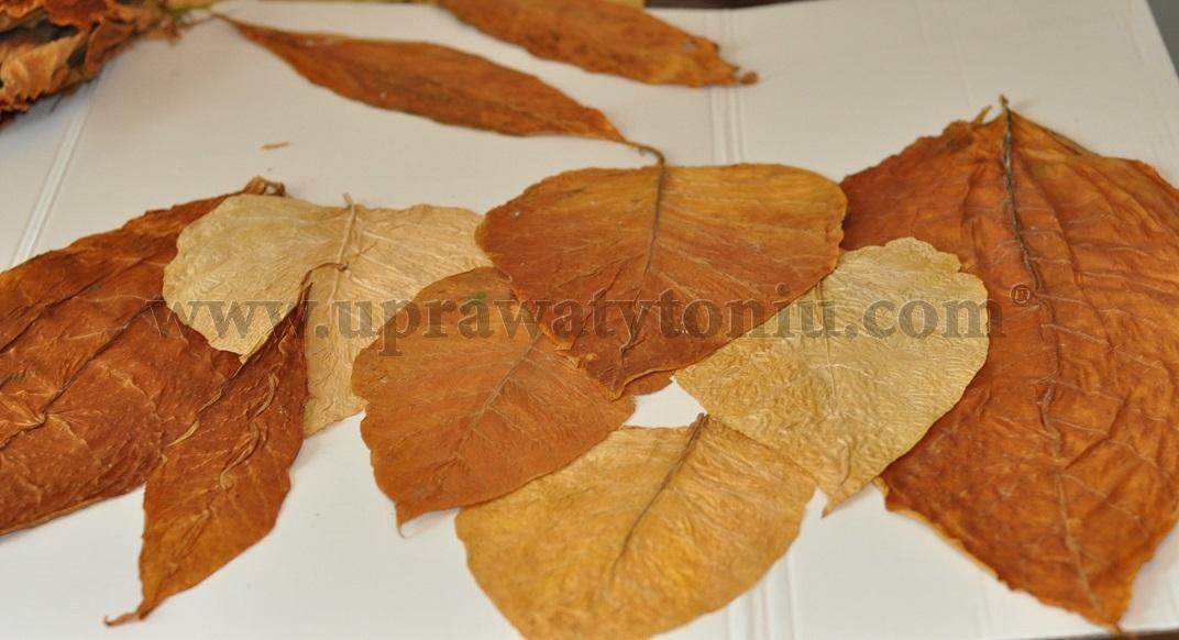 suszenie liści tytoniu