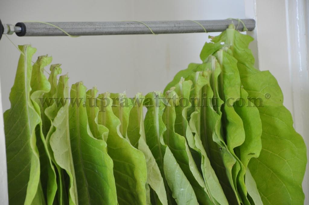 suszenie liści