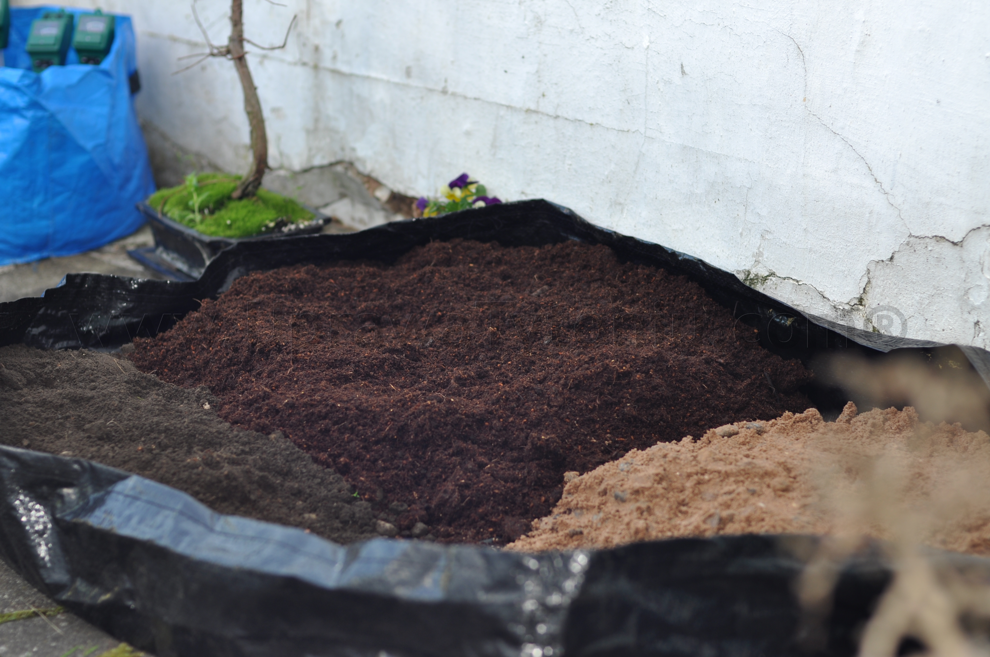 preparing soil for tobacco