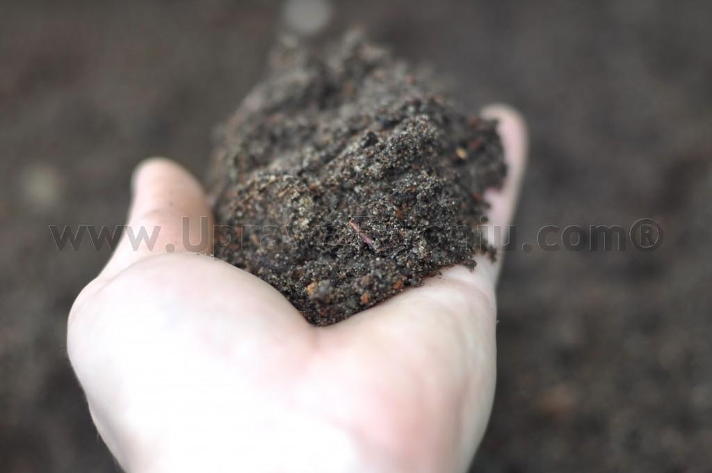 ziemia pod uprawę tytoniu