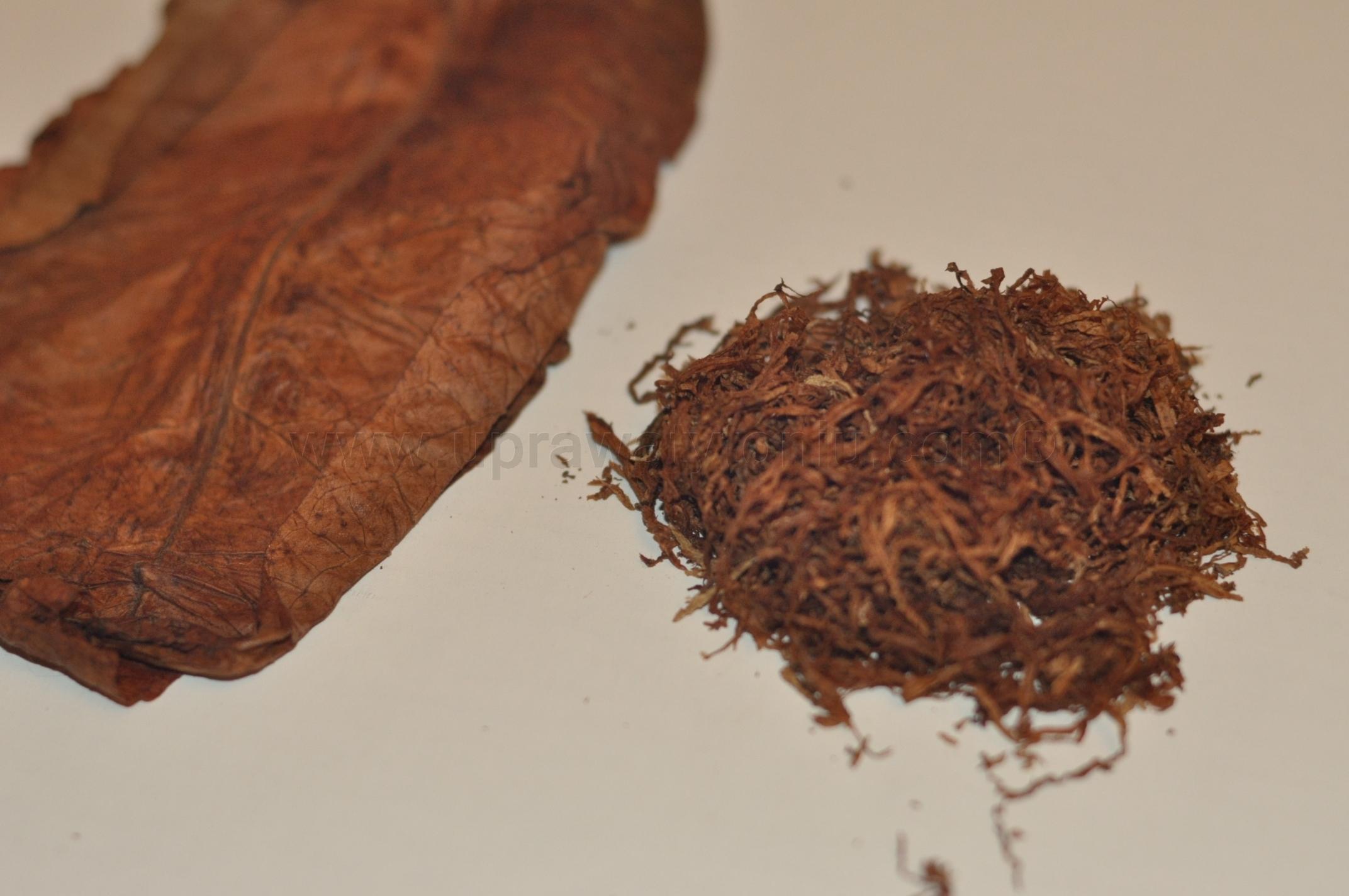 szybka fermentacja tytoniu