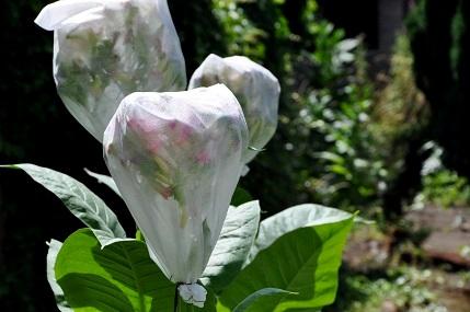 Jak zabezpieczyć kwiat przed niechcianym zapyleniem