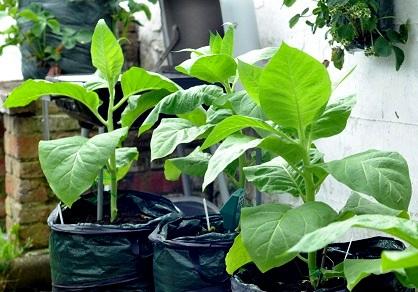 Wzrost Roślin – 4 tydzień