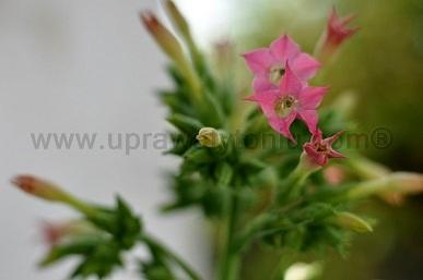 Wzrost Roślin – 7 tydzień