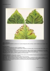 żółknące liście