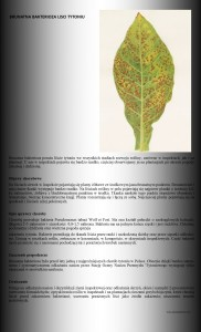 brunatna bakterioza
