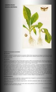 gąsienice rolnic
